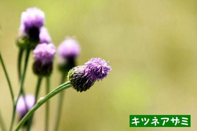JPG_4786.jpg