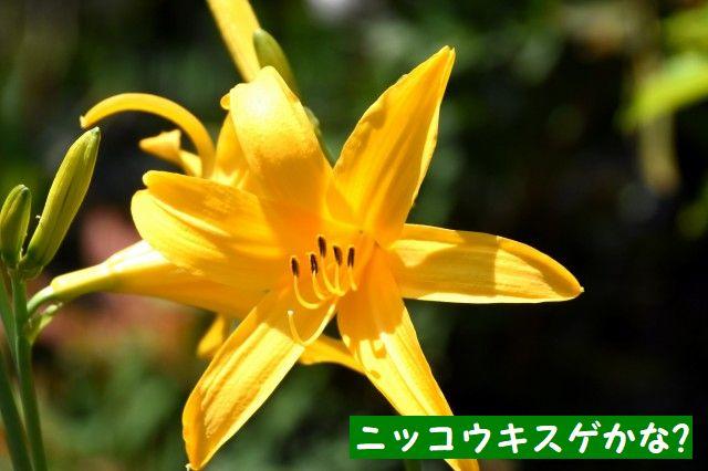 JPG_4829.jpg